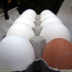 white eggs with 1 brown egg in a carton