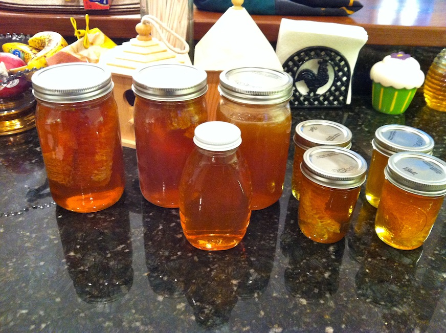 Our first honey harvest