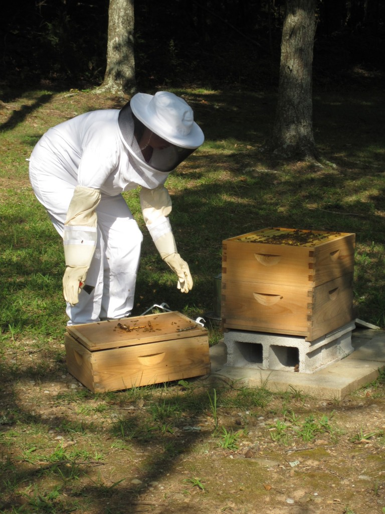 Helena checking on the beehive