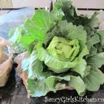 Organic Head of Cabbage