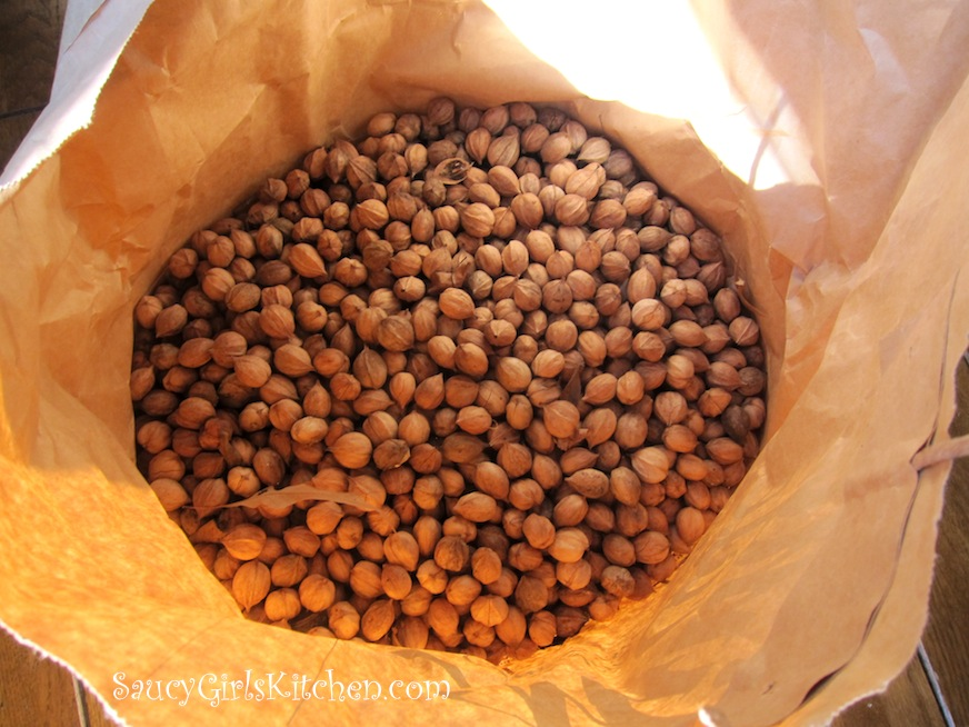 Bag of Hickory Nuts